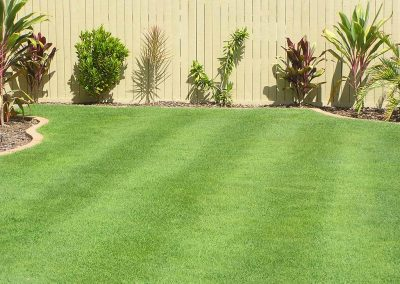 Queensland Blue Couch Turf Varieties Tinamba Turf