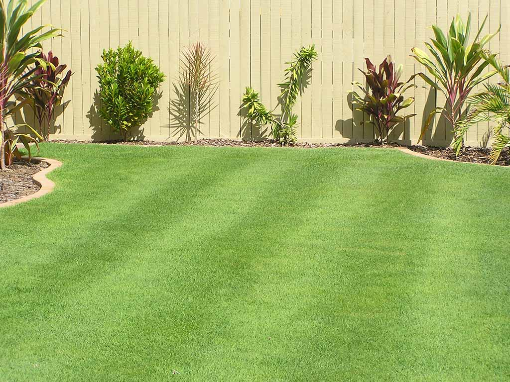 Sensational Queensland Blue Couch Turf Varieties Tinamba Turf Pdpeps Interior Chair Design Pdpepsorg